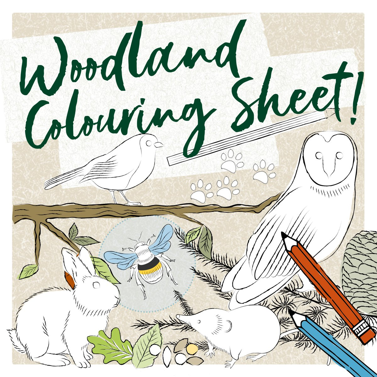 Something for all the family this Bank Holiday Weekend!   Click the link below to download our new Woodland Walk Colouring Sheet.  ➡️ https://t.co/j1ZvWgyvGX  #BankHolidayWeekend https://t.co/evSlVXz7nR