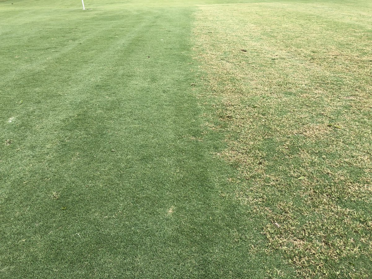 Why #PRE #herbicides are important...a picture is worth a 1000 words...or at least one webinar on it...pic.twitter.com/Y6nqcU6sSJ