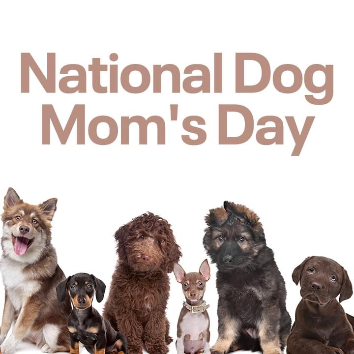 #pawsitivity https://t.co/62IRSFSFRN