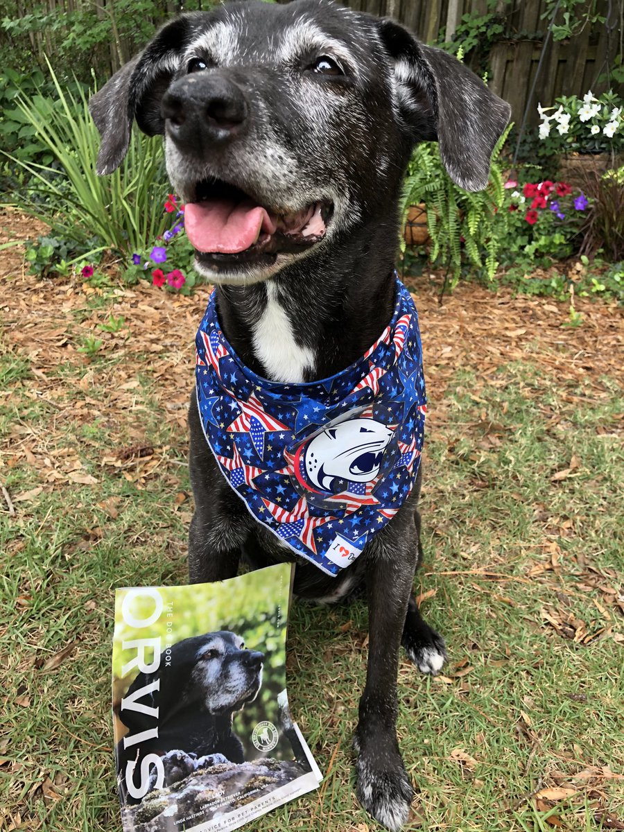 "Just saying, ""I could be an ⁦@TheOrvisCompany⁩ ""covergirl"" & my rates are competitive @ 1 treat per photo. #SeniorPupSaturday #RescueDog #SeniorModel pic.twitter.com/qsNF6MN6qb"