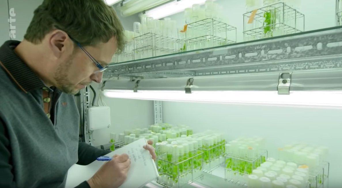 Proprioception : quel point commun entre l'humain et le végétal? Tous deux se mettent debout, explique Bruno Moulia, chercheur d'@INRAE_France dans ce documentaire d'@ARTEfr https://t.co/oKTfsYHtJT https://t.co/7oztDPmOeU