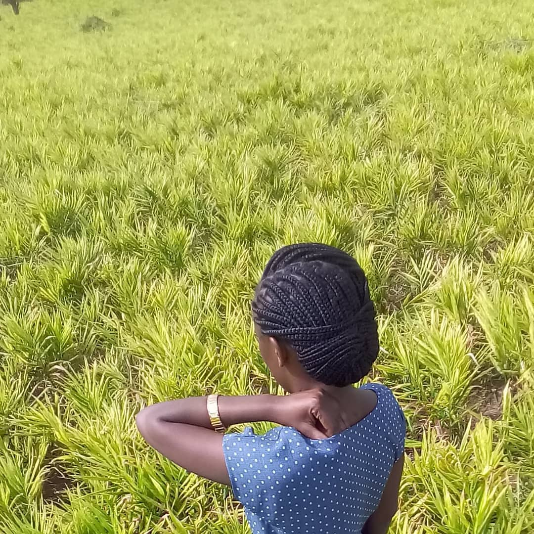 Take Agriculture as a business. It is viable when you give your best to it. Don't seek overnight success. Agric wil not give you sudden wealth but it will build you sustainable wealth. More females need 2 come into agric becoz they do things with more precision, care and passion. https://t.co/7QMWxuyVKV