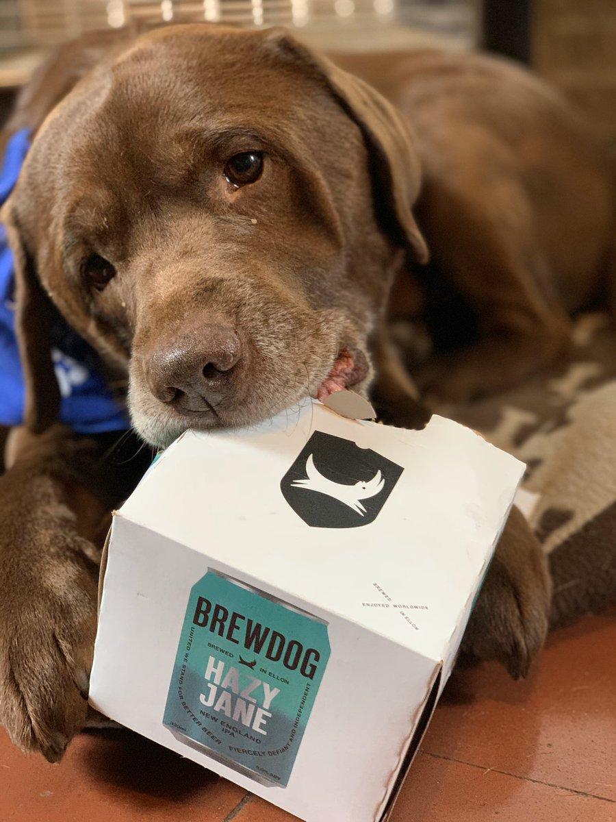 Ozzy dog loves a bit of @BrewDog Hazy Jane! (well, the box anyway) https://t.co/vG7MgfXNTp