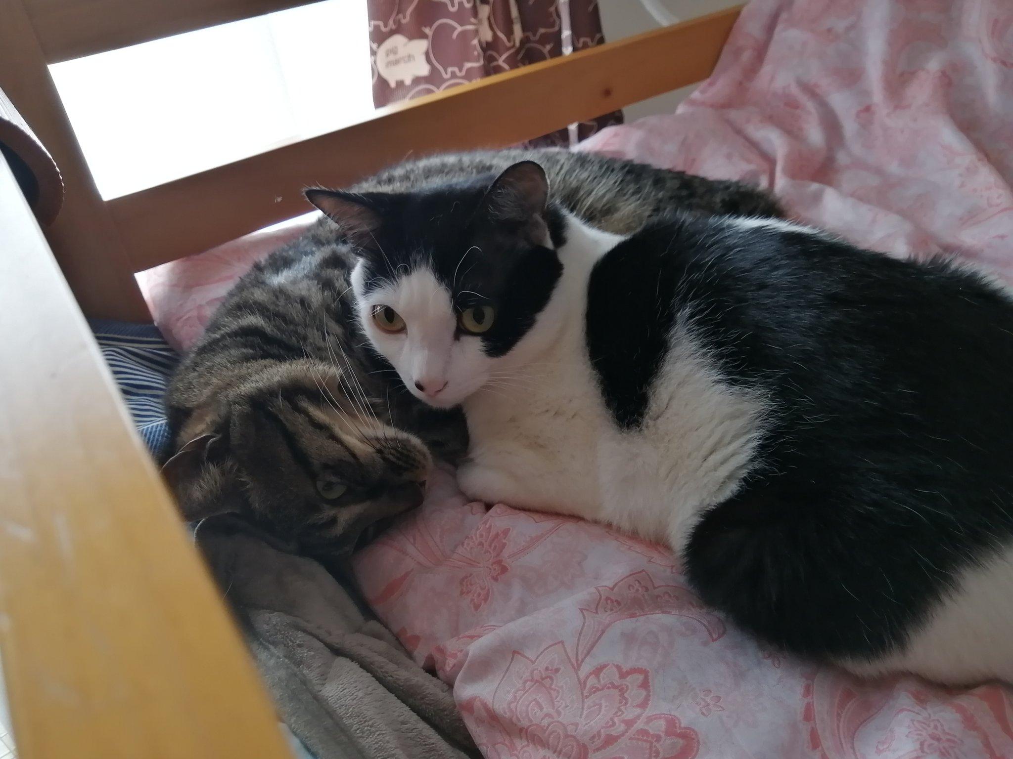 めっちゃうちの猫と似てるw