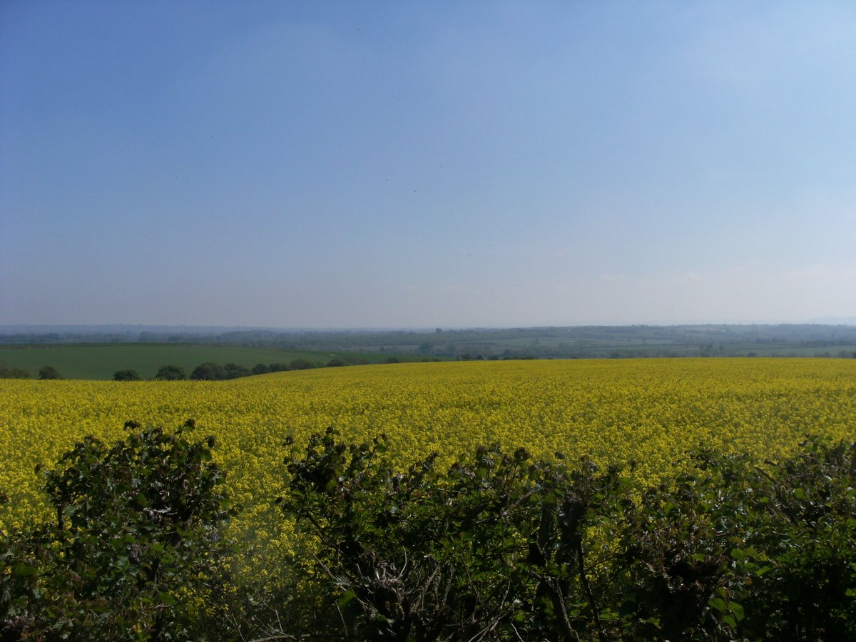 Rapeseed fields around #Cuddesdon with views of #RiponCollege and Upperfield Farm #Oxfordshire