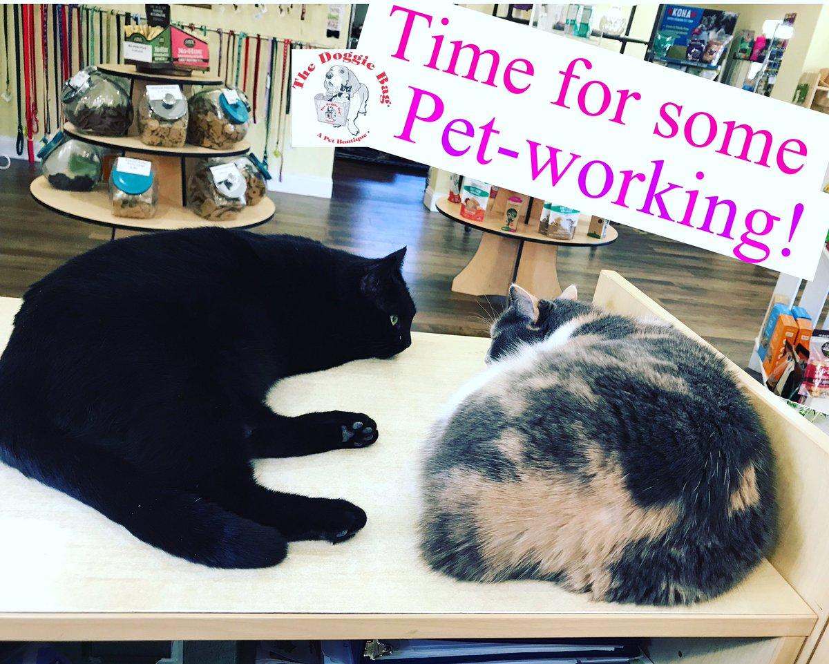 Typical Staff Meeting @doggiebagboutique   #thedoggiebag #shopcats #blackcat #calicocat #staffmeeting #petworking #onthejob #lakelandflorida #lakelandfl #lovelakeland #catsoflakeland #lakelandstrong #catmom #catmomsoflakelandflpic.twitter.com/CeHWRaWhyj