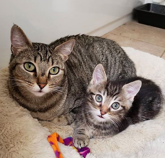 Update: they have been adopted together!