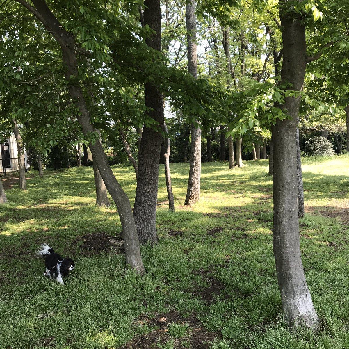 朝の散歩が気持ちのいい季節です。  朝の光を浴びると、身体がスッキリと目覚め、体内時計が整います。  その結果、睡眠パターンが安定し、ダイエットにもつながるという研究結果もあるんですよ。  散歩に行かれなくても、窓際に座って朝の光を浴びてみてくださいね。  #スパイア #朝の散歩 #犬の散歩 https://t.co/duc3Ocqqed