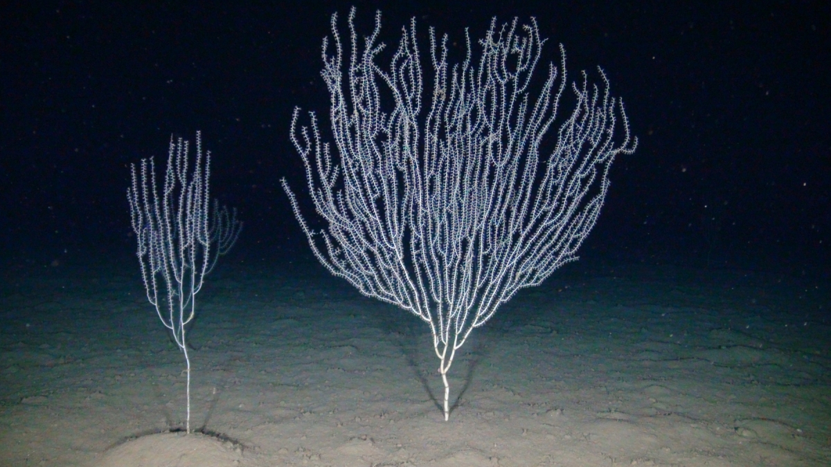 test Twitter Media - There's hope for European waters - @OceanaEurope is campaigning for the protection of 15 stunning marine biodiversity hotspots #30by30 #30x30 #MPA https://t.co/PyinBQRd6VPhoto: Endangered bamboo coral (Isidella elongata), Aeolian Islands ©@oceana https://t.co/tikPb7LyVX