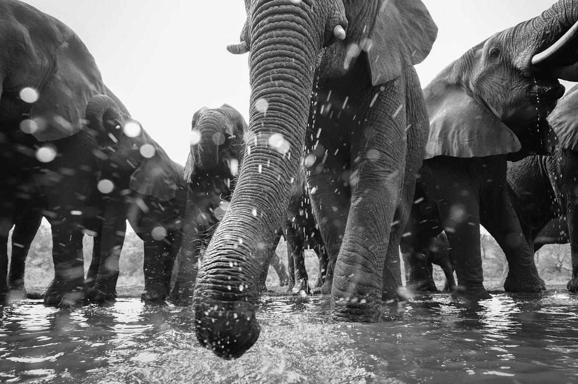 """Para los amantes de la fotografía profesional, que muestra la naturaleza de nuestro impresionante planeta. """"The German Society for Nature Photography"""" ha publicado recientemente  su ganador,2020"""", """"Peter Lindel - https://t.co/9CZD3GCP8d (Noticia) https://t.co/Es3QSxs23H (Galería) https://t.co/AajK31wGCY"""