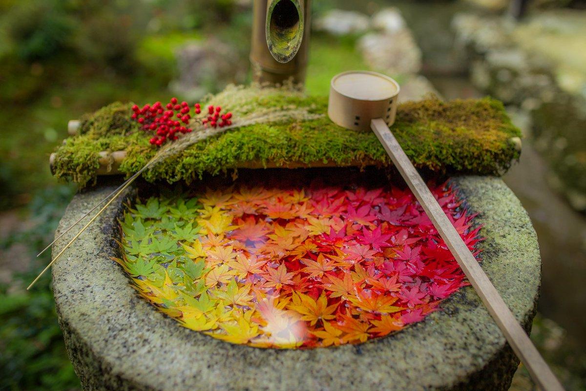 『花手水』 手水舎の中で作られる日本の芸術を見て欲しい。