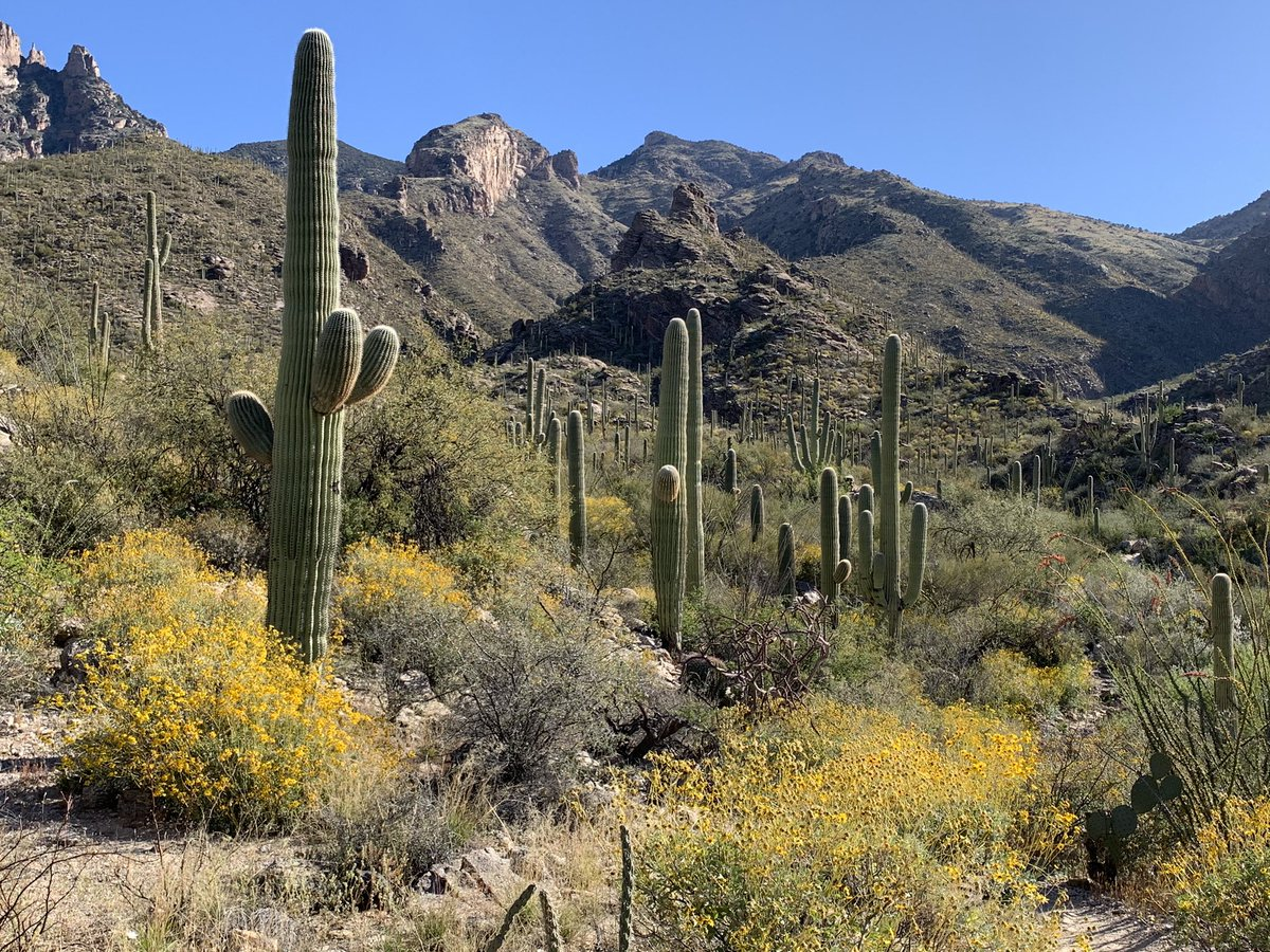 Goodrum lab is looking for post docs to explore exciting questions at the the intersection between cell biology and virology. Pls retweet and DM me if you are interested. Tucson is an amazing place to live and so much great science to do! https://t.co/uR20FTunPu