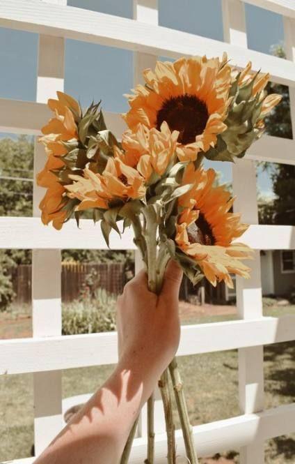 001 Aesthetic On Twitter 46 Trendy Yellow Aesthetic Wallpaper Iphone Sunflowers Sunflowerwallpaper Ipho 8230