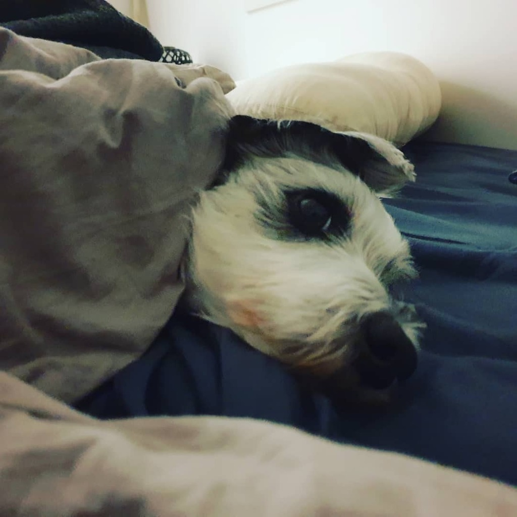 Night shift sleep time with this weirdo, night!  #sleepy #bedtime #nightshift #cutedog #puppygram pic.twitter.com/K1CVLqxQyD