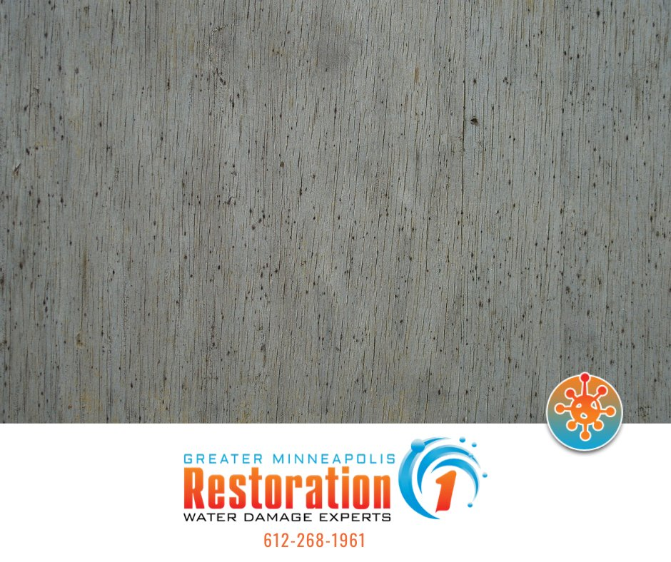 Recently find mold in your basement? Find out why you should avoid the DIY Mold Removal method and go with a professional: http://ow.ly/6yIu50zQLt1 #mold #diy #moldremovalpic.twitter.com/tZxIH012ZG