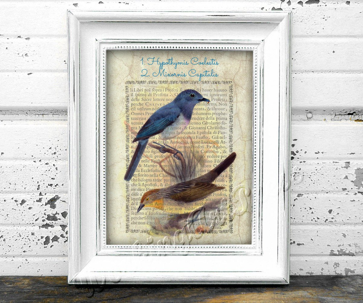 Printable bird wall art lithograph ornithological print Hypothymis Coelestis and Mixornis Capitalis.  Aves collection.  Digital download https://etsy.me/2tWgeib #Etsy #WorkingArtPress #HomeOfficeStudypic.twitter.com/77cRczAxFa