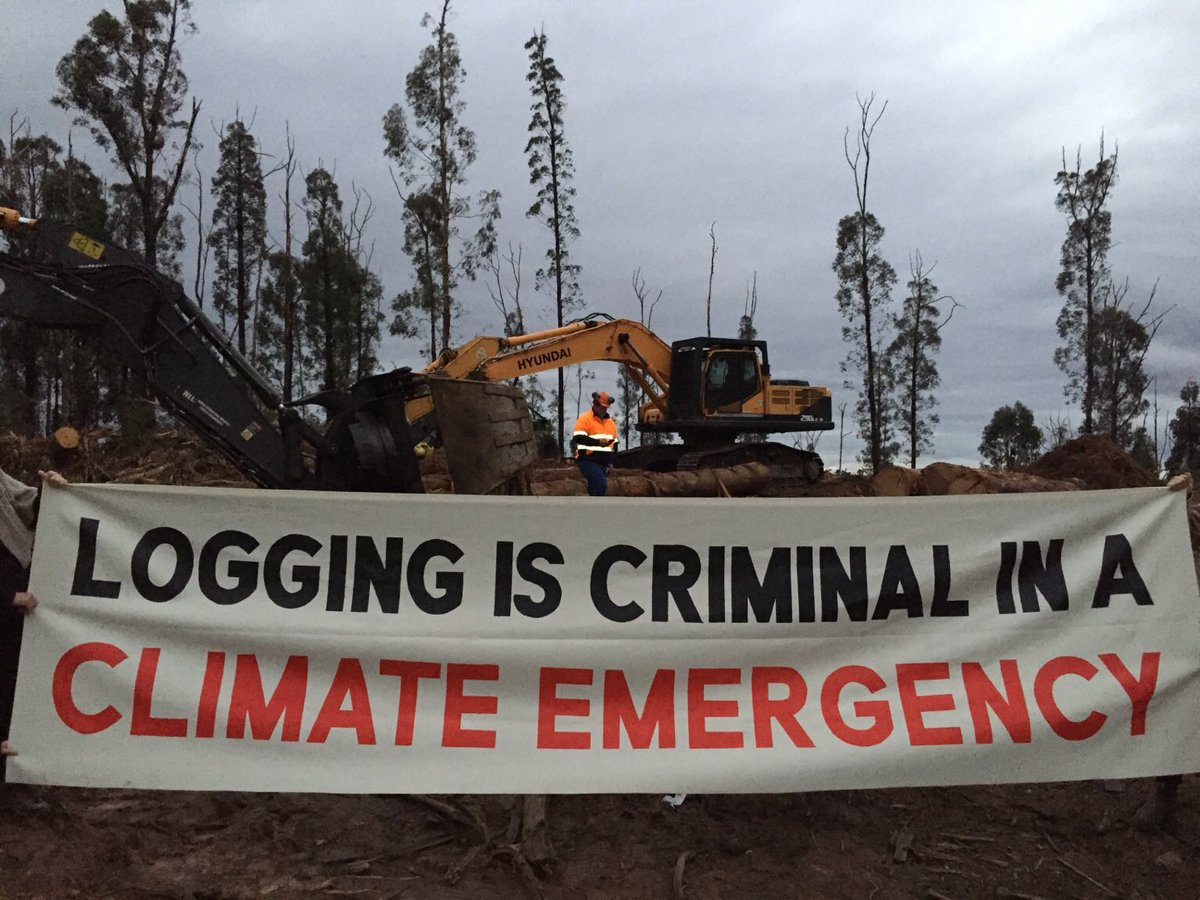BREAKING: Right now in Kinglake regional communities, conservation groups and traditional owners are saying no to the continued decimation of our forests. Native forest logging is criminal in a climate emergency. #JustTransitionNow #LoggingImpactsVic https://t.co/YyuPXuufAe
