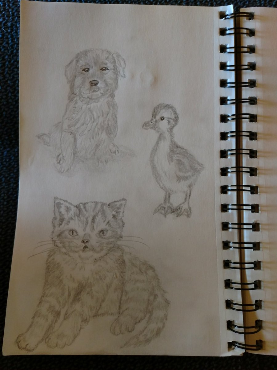 Here are more sketches based on pics from a book.  Shading seems to be getting better, but still need work on proportions, etc.  Kind feedback welcome.  #justlearning #sketching #art #stillpracticing #drawing #babyanimals pic.twitter.com/aHjcpWURla