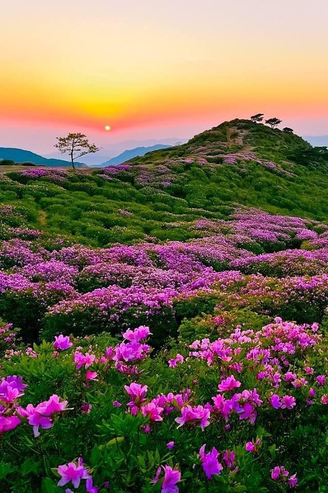 Ah #Nature  a precious moment to remember ... misha pic.twitter.com/TpZKhq2vXb