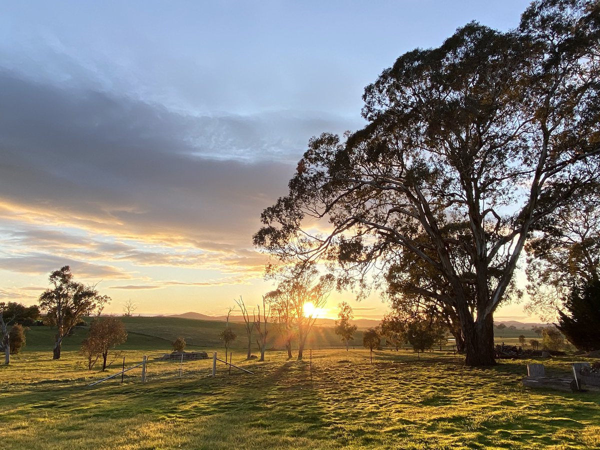 It's a windy cool morning, heading to 14° today.  #canberra pic.twitter.com/ClX4O7fPCJ