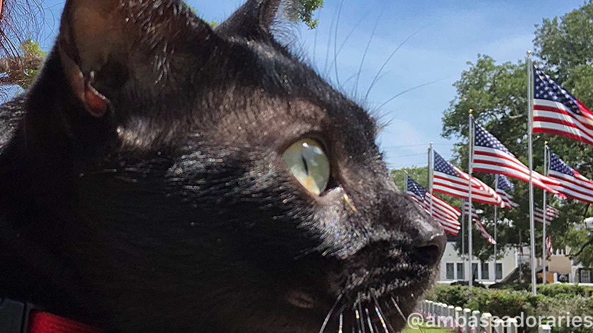 I am learning a lot this weekend about love, honor and sacrifice. Mom said we will have some fun, too, in celebration of so many. Happy Sunday!  #CatsOfTwitter #sunday #memorialdayweekend2020 #cat #cats #kitty #MemorialDayWeekend #gato #blackcat pic.twitter.com/Fq0J9ADu4V
