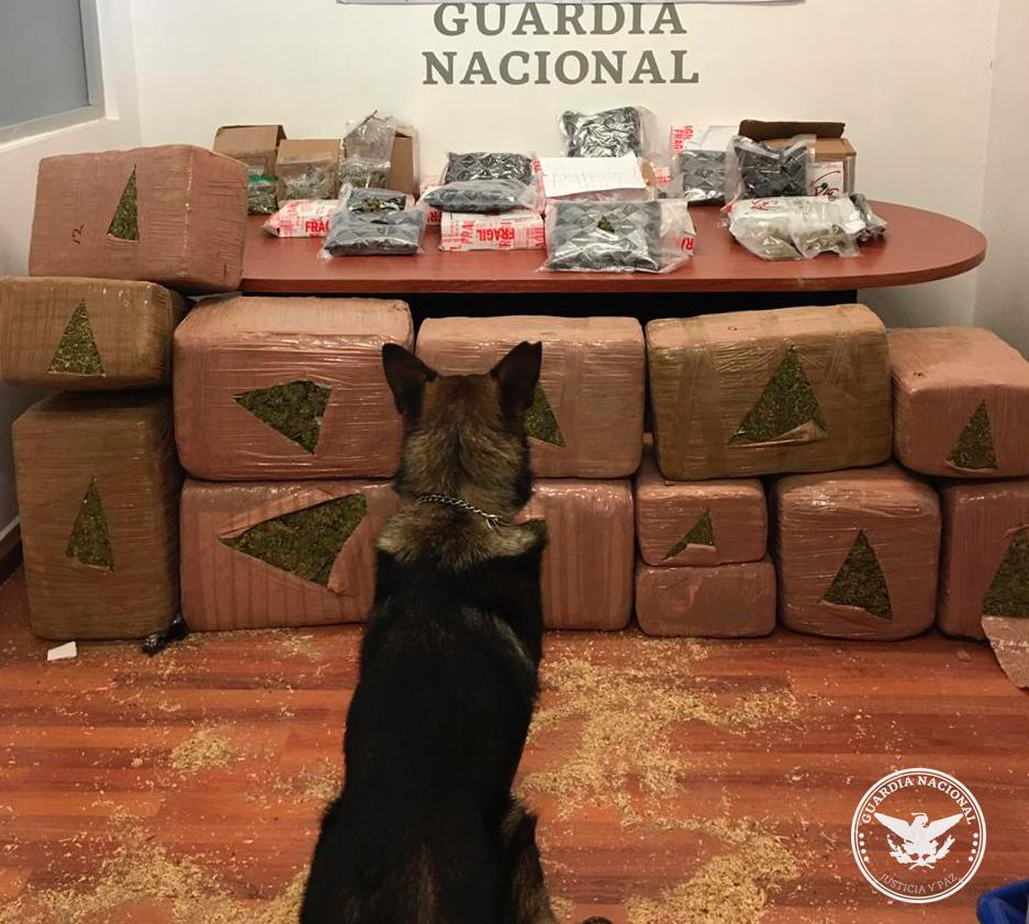 Realizamos rastreos con binomios caninos en una empresa de paquetería en Tlajomulco de Zúñiga #Jalisco y aseguramos alrededor de 208 kilosde aparente marihuana distribuidos en 25 paquetes que serían enviados a ocho estados de México y uno de EUA. #JusticiaYPaz https://t.co/2COXYrStNF