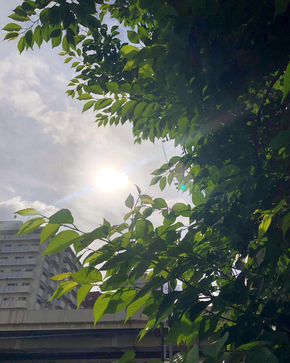 太陽さん! #tokyo #gotanda #nishigotanda #goddmorningpic.twitter.com/eRMgoOdfQs