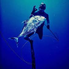 In #bluewater hunting, a #reel works well for paddy hopping, shooting smaller fish like mahi mahi, yellowtail, small wahoo, uluas, etc.  https:// bit.ly/3g3LgfM      #apneadiving<br>http://pic.twitter.com/Cy15c9DiQM