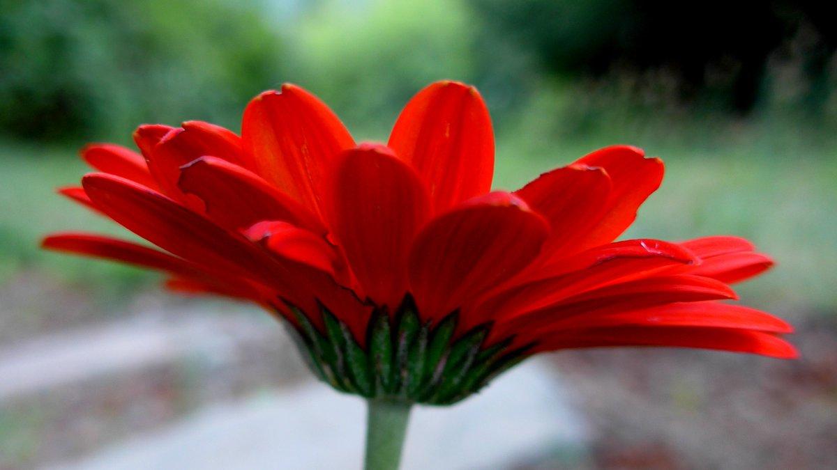 Here is some orange. #spring #flower #colourpic.twitter.com/ZUhRydeEYD