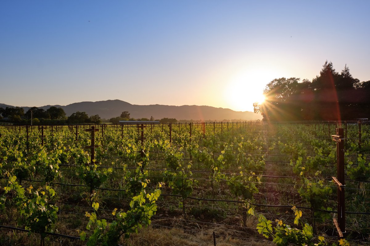 Fortunate to call this place home! #Napa #NapaValley #InspireNapaValley #ENDALZ #california #wine #wines #winerypic.twitter.com/CC1mx9uokf
