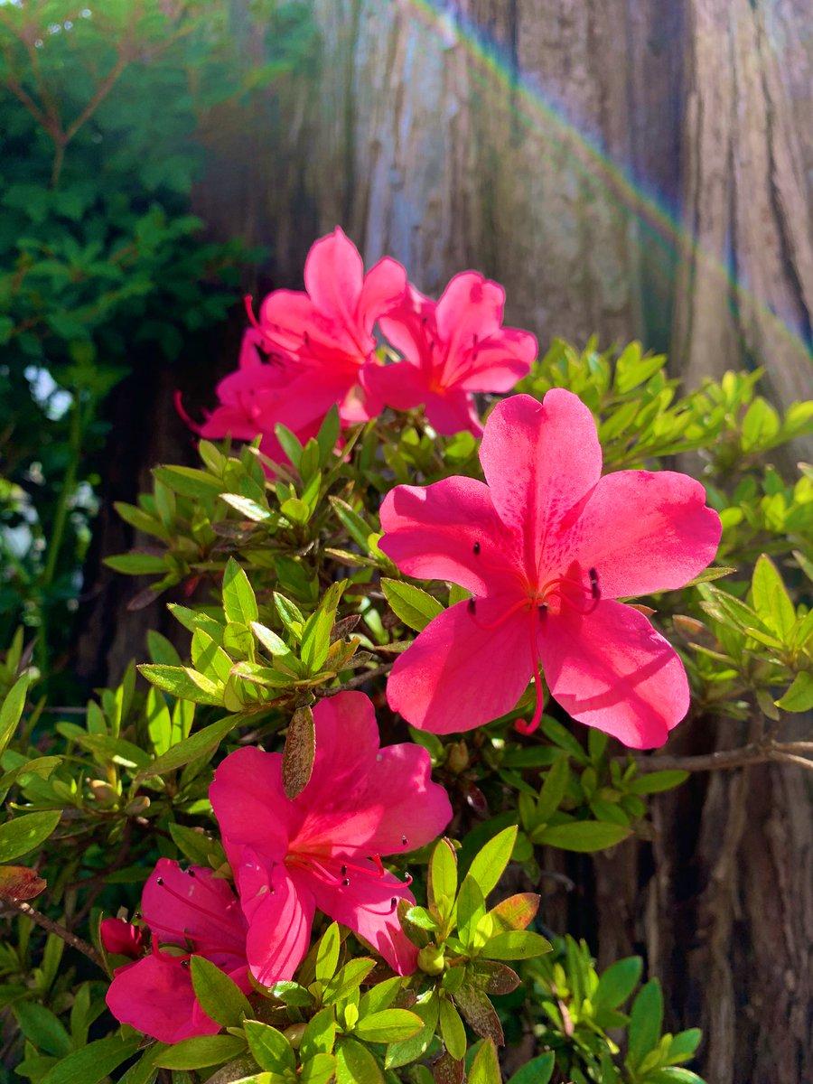 ٩(๑˃̵ᴗ˂̵๑)۶ STAY POSITIVE✩︎ #いっしょにがんばりましょう  #私の_世界に一つだけの花 #SMAP pic.twitter.com/wAb9fSp28p