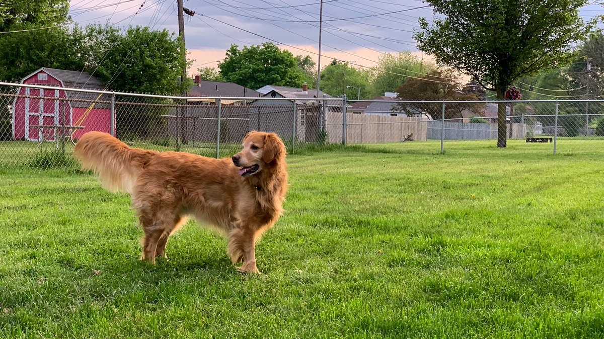 Enjoying that last bit of nice weather before the storms roll in #goldenretriever #dogsoftwitter pic.twitter.com/MdWOjQUfht