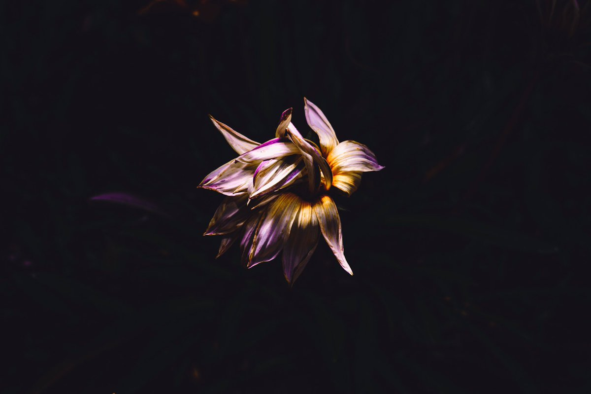 Withered  #dahlia #flowerscape #streetphotography #streetsnap #sonyalpha #bealpha #tamron #godox #日中シンクロ #マイタムロンレンズ #ストリートスナップ #写活 #ファインダー越しの私の世界 #キリトリセカイpic.twitter.com/0n7plyDUAA