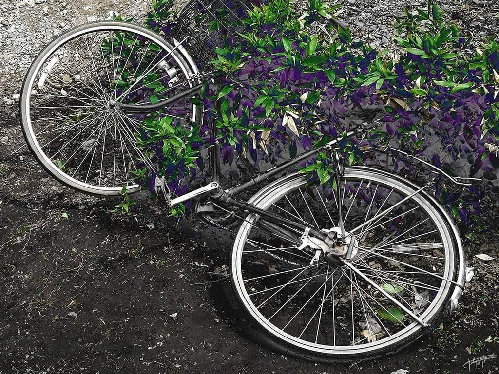 Special effects / Original  #exhibition #photo #art #creative #photographer #写真家 #fotografo #photoarts #landscape #world_scenery #journey #instagood #写真繋がり #special_effects #特殊効果 #Discoverypic.twitter.com/TiUP8ClMuq