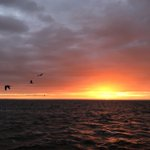 Image for the Tweet beginning: #Waddenzee #visserij