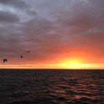 Image for the Tweet beginning: #Waddenzee #visserij