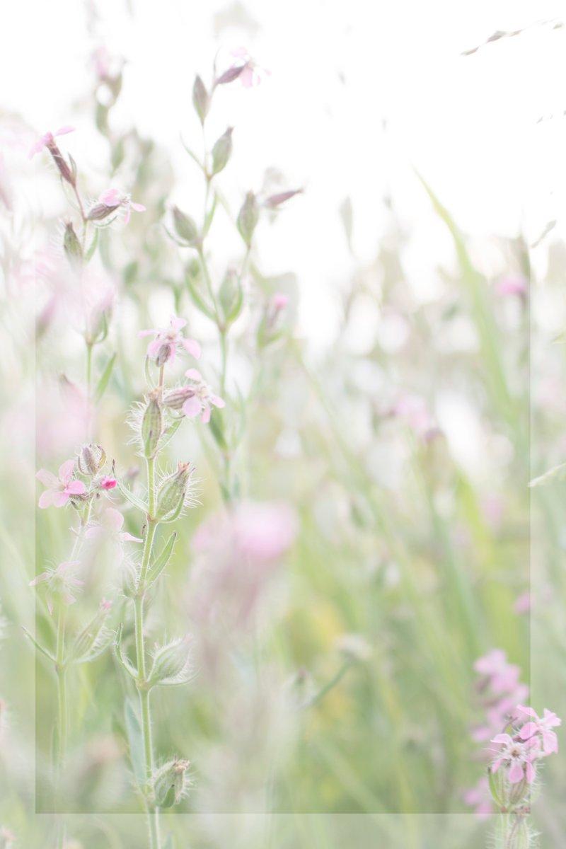 #TLを花でいっぱいにしよう  #花写真 #photography #ファインダー越しの私の世界 #キリトリセカイ #カメラ男子 #写真好きな人と繋がりたいpic.twitter.com/BAVH5QRaVc