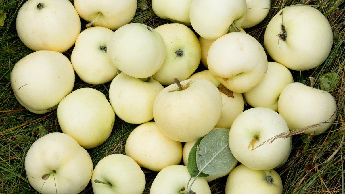 сорта яблок для беларуси в картинках чтобы ваше сердце