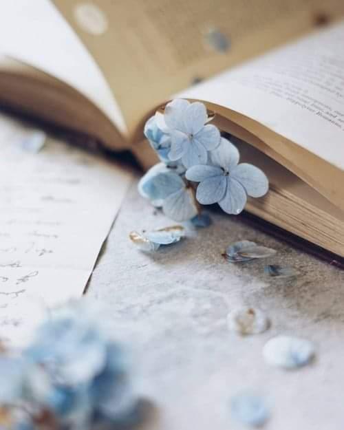 Günaydın. Okumadan geçen bir gün yitirilmiş bir gündür. -J.P Sartre  #günaydın #kitap #anlamlısözler #iyibayramlar #kitapsever #okumak #kitaplariyikivar #kitapdostu #books #booklove #read #goodmorningpic.twitter.com/nhgckbTYCA