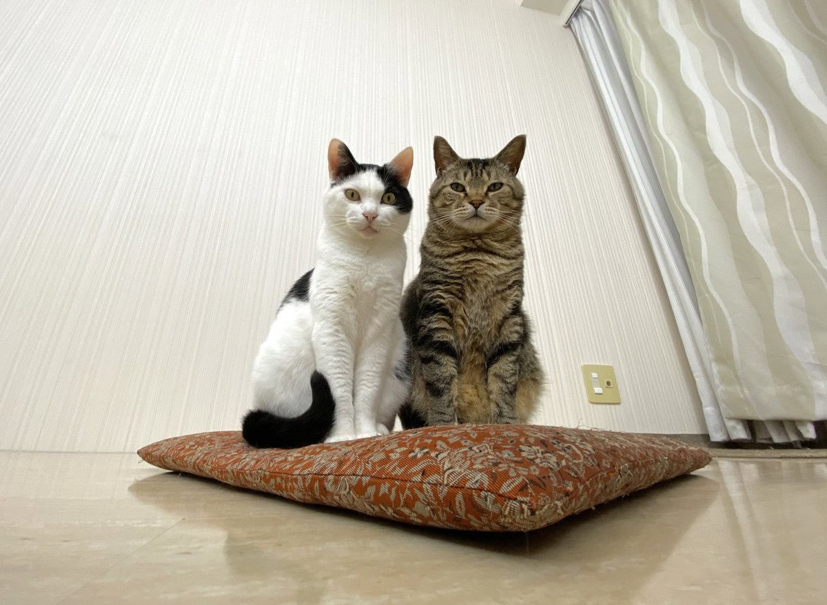 この記念日が必要なくなる日が早く来ますように#保護猫の日