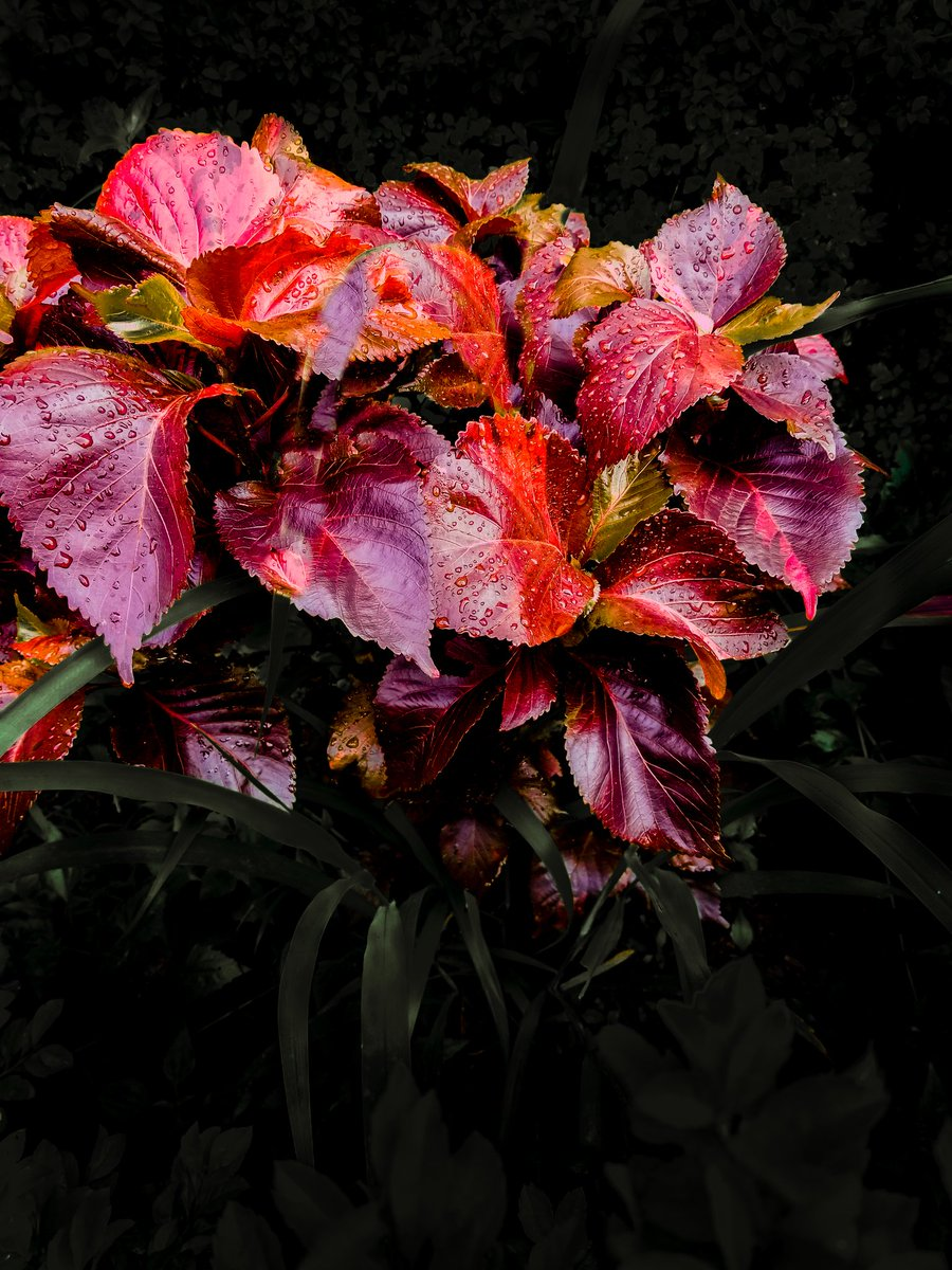 Edited this with Lightroom rate me #naturephotography #nature #photography #naturelovers #photooftheday #landscape #ig #travelphotography #travel #landscapephotography #photo #wildlife #photographer #sunset #birds #naturelover #love #instagood #picoftheday #instagram #EidMubarakpic.twitter.com/GObwAxb6YZ