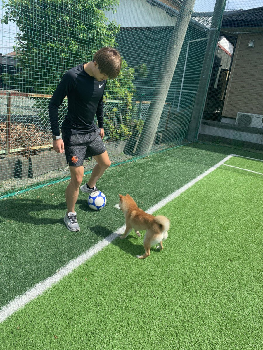 Training partner  #柴犬 #豆柴pic.twitter.com/QlyM21BhlS