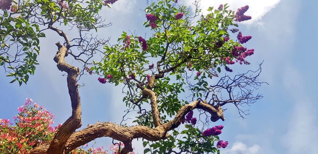 Welcome to a new week! #week #mondaythoughts #trees #morning #sky #exercise #daily #outside<br>http://pic.twitter.com/RfLArb71b8