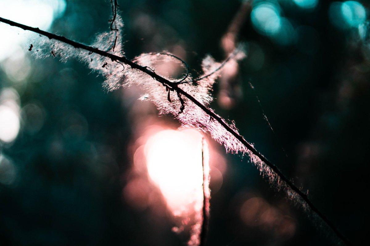 light peeking through the cottonwood   #SonyAlpha #coregraphy pic.twitter.com/1o1RkB8p1F