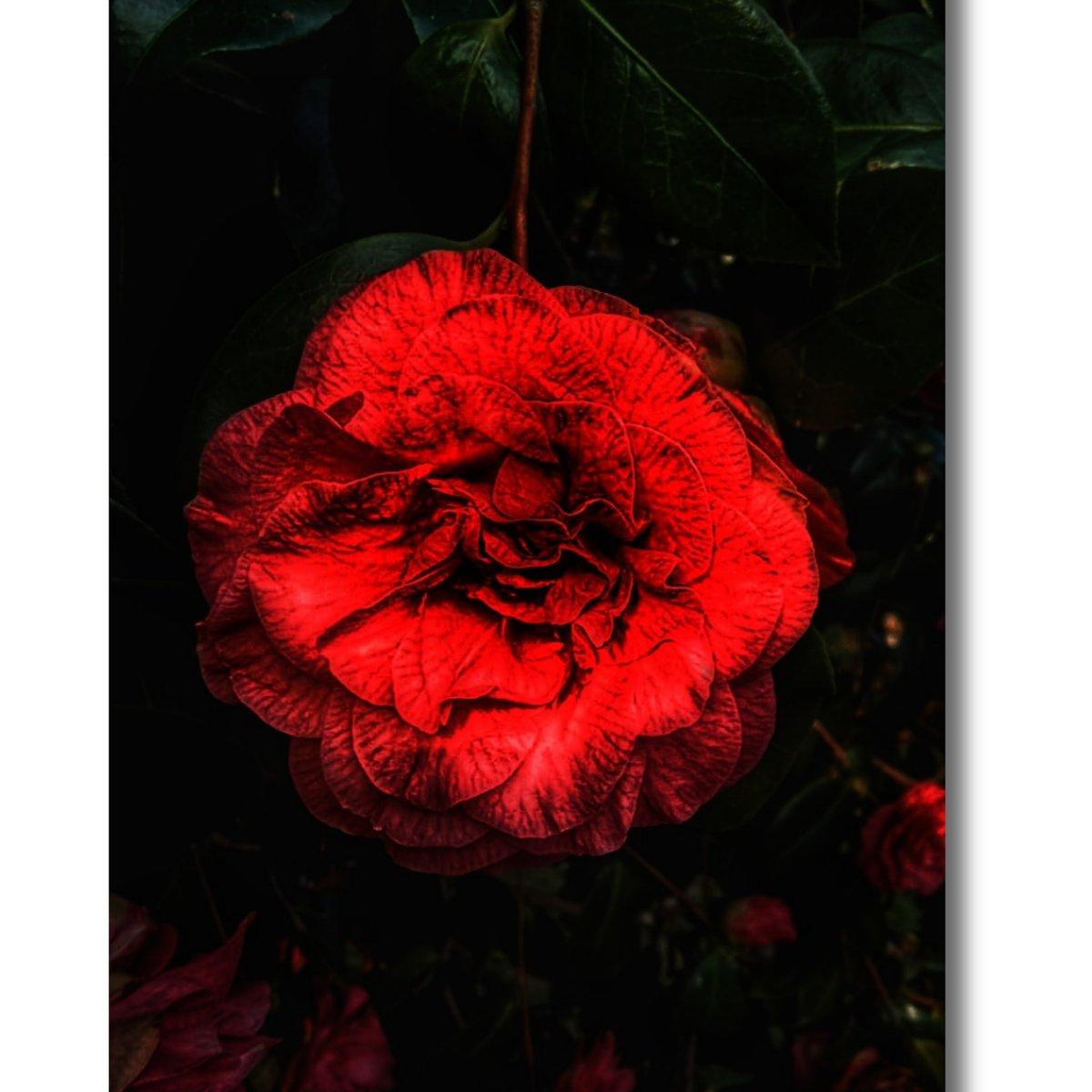 """Life is theflowerfor which love is the honey."" #flower #Flowergardenpic.twitter.com/q6i2nTLbYt"