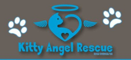Please share & retweet Kitty Angel Rescue.Good initiative that we support. Please help to Combat Animal Abuse https://t.co/xJuf42nhfG #CatsOfTwitter #catsofinstagram #Caturday #animals #humanity #petsofinstagram #pets #animalsathome   #AfricaDay #ItsTakealotTime #day60oflockdown https://t.co/oQvqyZKcU3