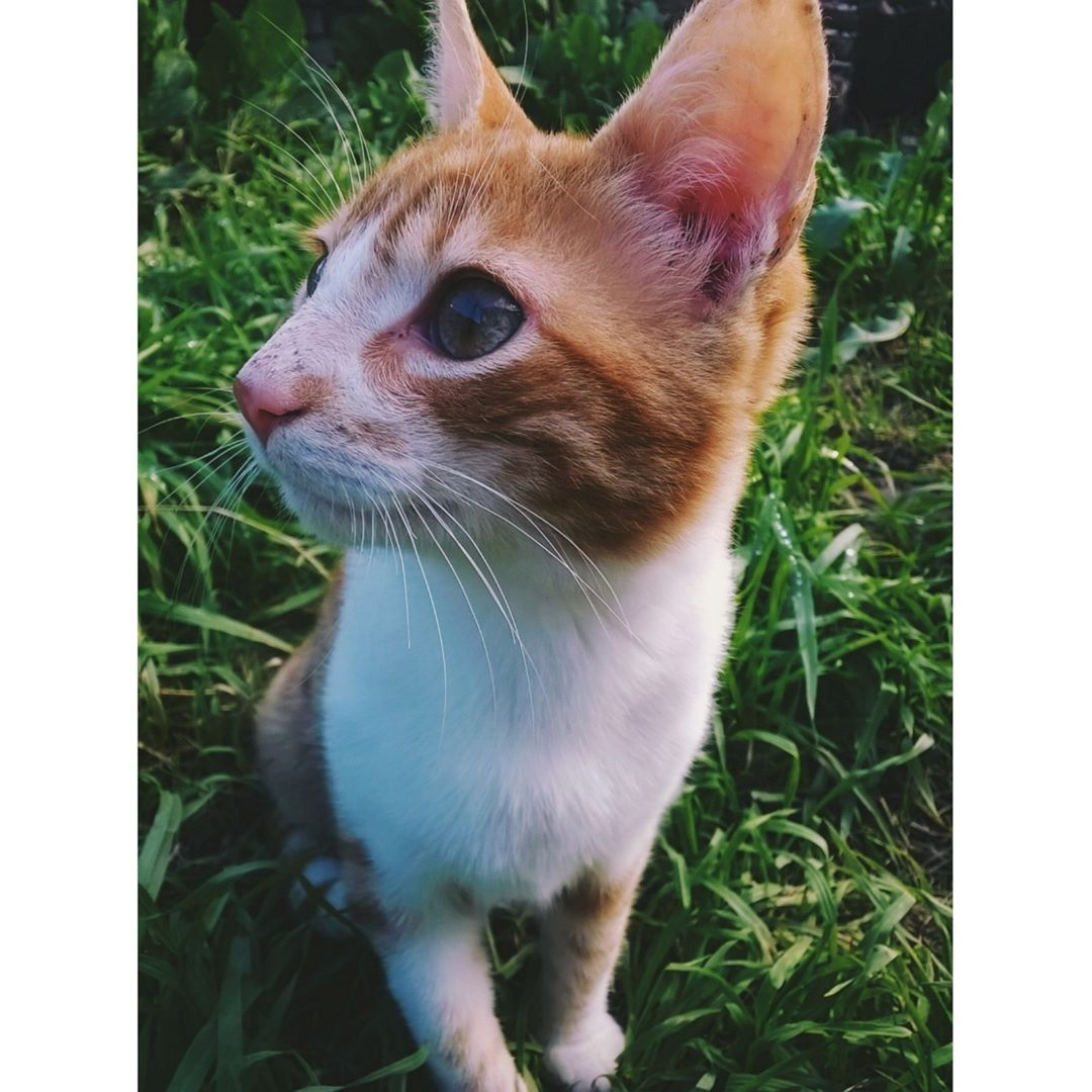 Cute, Beautiful, Fluffy and Funny Cats .. Show your Love to Cats… #catoftheday #catsoftwitter #catsluver #petsluver #pets #cats #caturday https://t.co/B4juA5Wu85