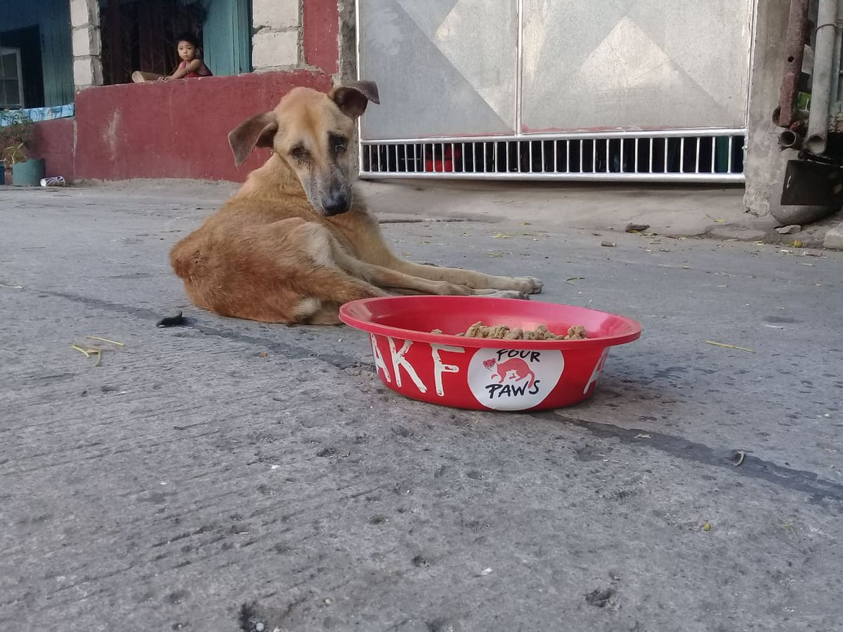 In the Philippines, our partner organisation Animal Kingdom Foundation (AKF) is doing a feeding program in Manila, Central Luzon and in the north of Luzon. With our support, their team can keep feeding around 400 animals 🐶🐈 a week: https://t.co/R4kFMri8Io https://t.co/uX4L3Y92Si