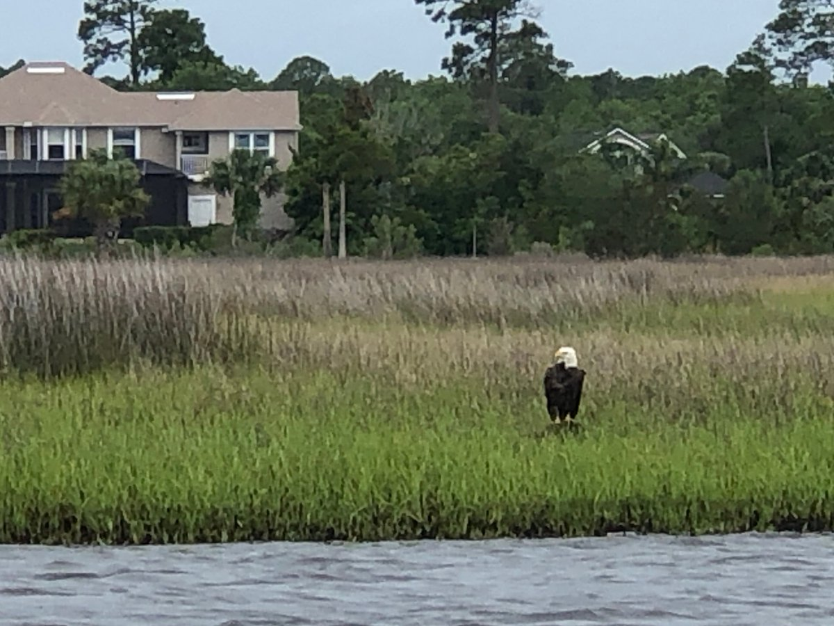 This #BaldEagle was spotted keeping watch on the Intracoastal near Beach Boulevard this morning in #Jacksonville.... perfect on this #MemorialDay.  #NeverForget #HonorTheFallen #HonorThem #UltimateSacrifice #Military #Heroespic.twitter.com/lgOUyd1R1n
