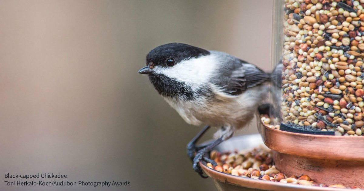 Have you ever heard these common bird songs and calls? ow.ly/mwsP30b1Fj0